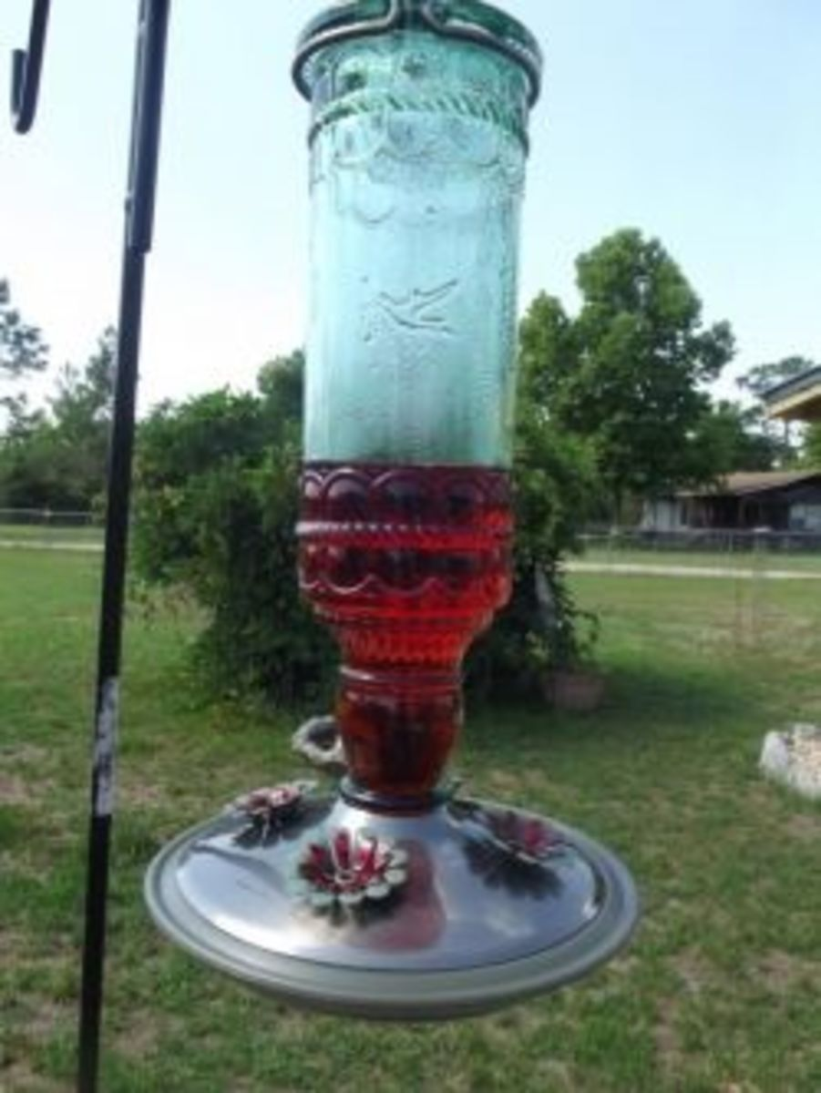 hummingbird feeder recipe