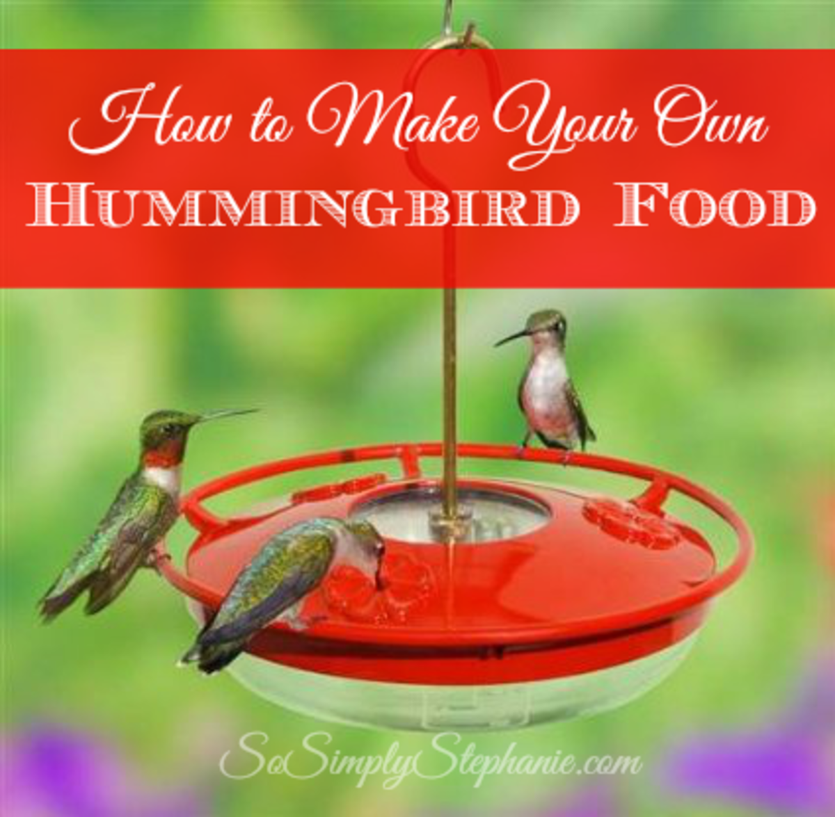 Hummingbird Food. What do Hummingbirds Eat?