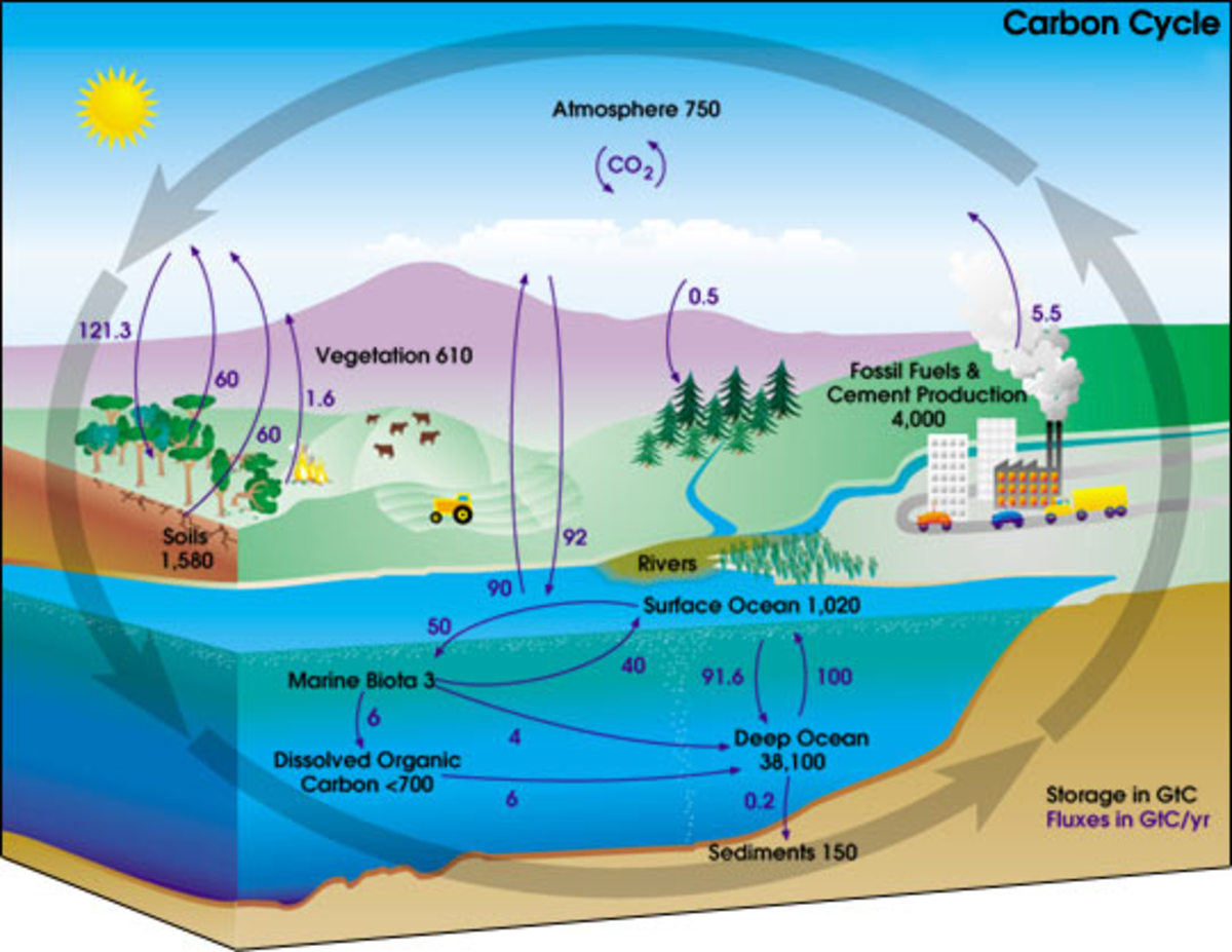 Human Impact on Biogeochemical Cycles