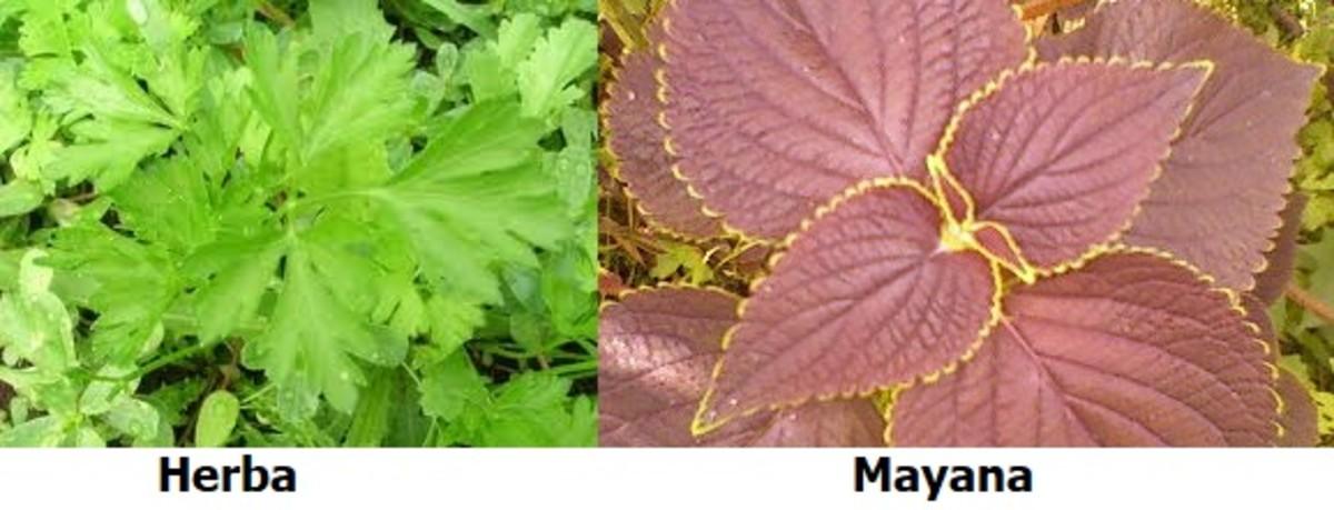 the-healing-wonders-of-herbs