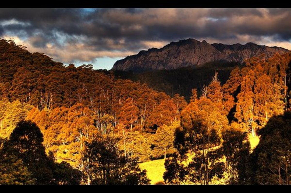Tasmanian landscape in the 21st century.