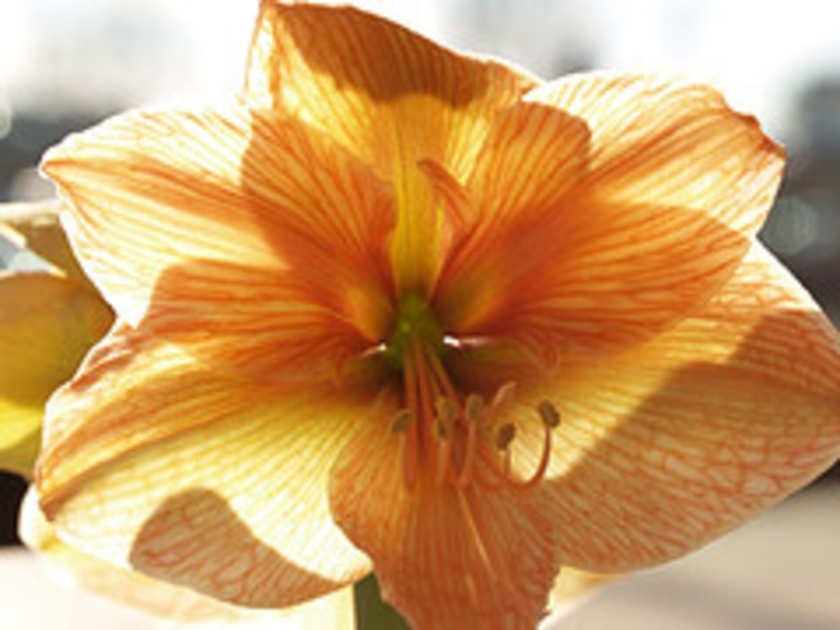 orchid—paparutzi (Flickr.com)
