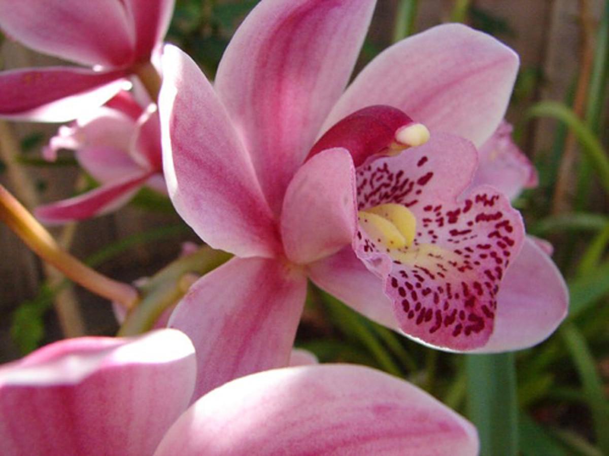 Orchid -beeep (Flickr.com)