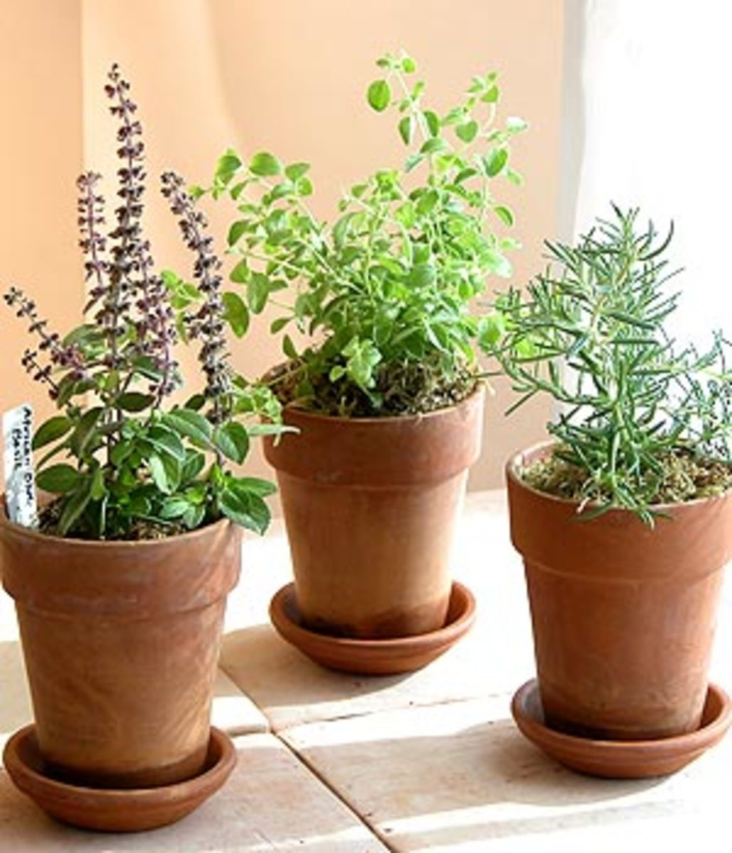 Pots of herbs are a great favor and centerpiece!