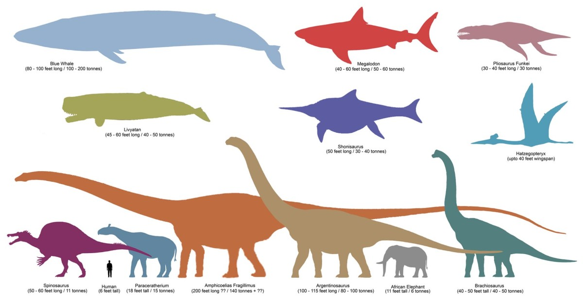 Comparision of Blue Whale With Other Creatures that Walk/Walked on Earth! Click to enlarge.