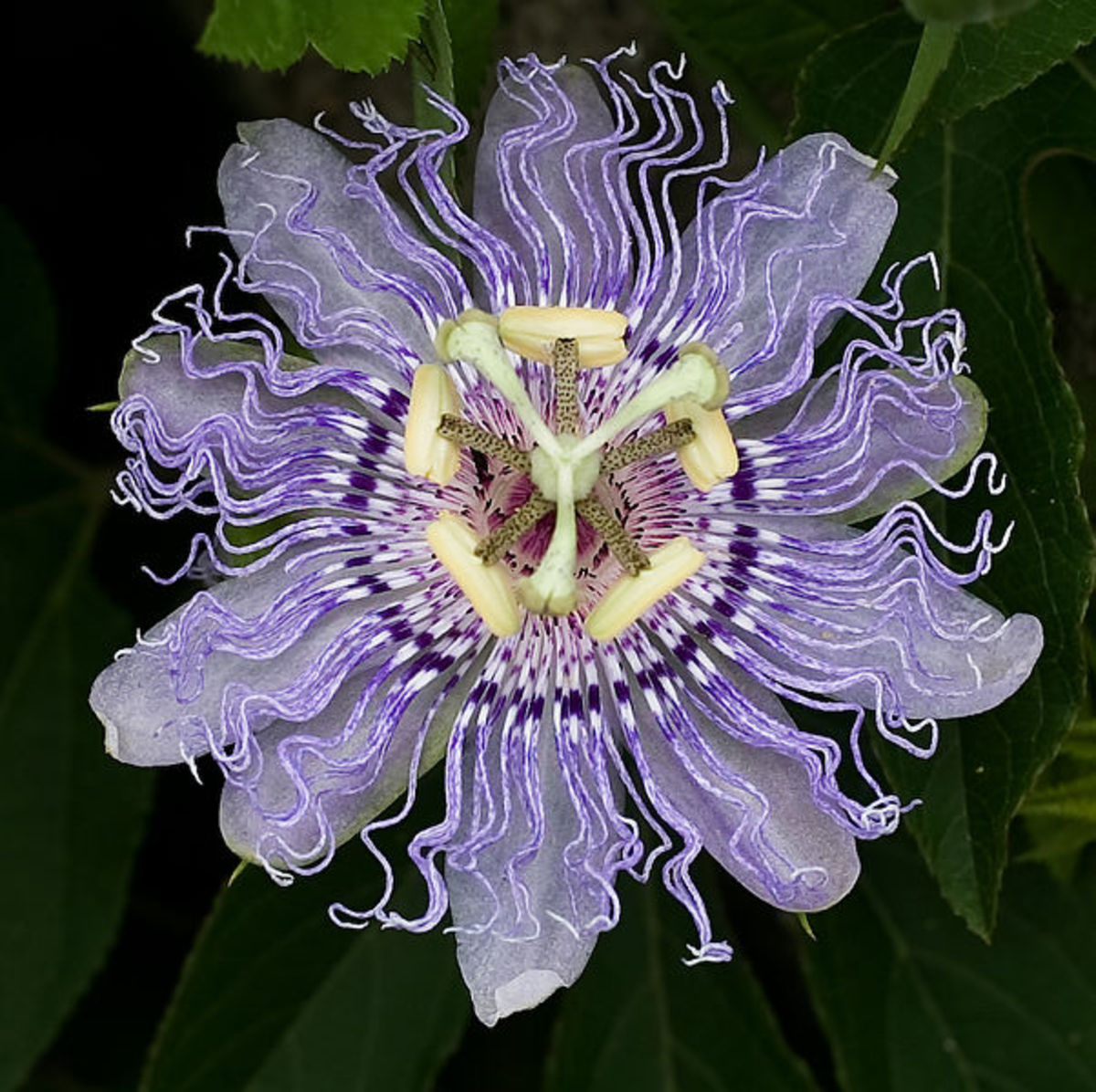 Nature S Pharm Passion Flower