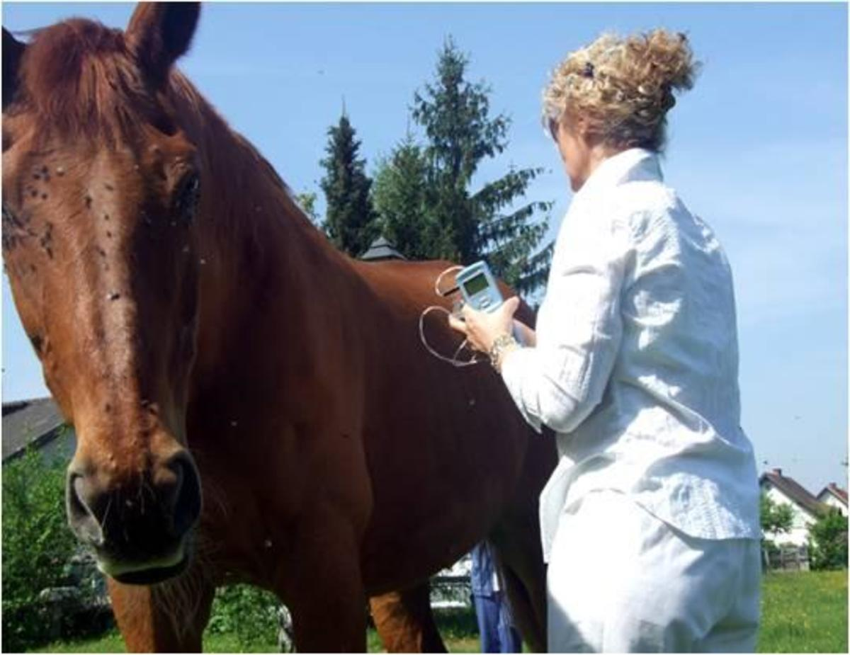 Veterinary use of Scenar