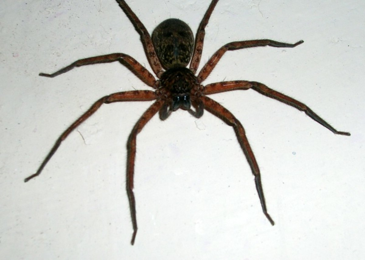 Many people have an exaggerated fear of spiders, even though most are harmless
