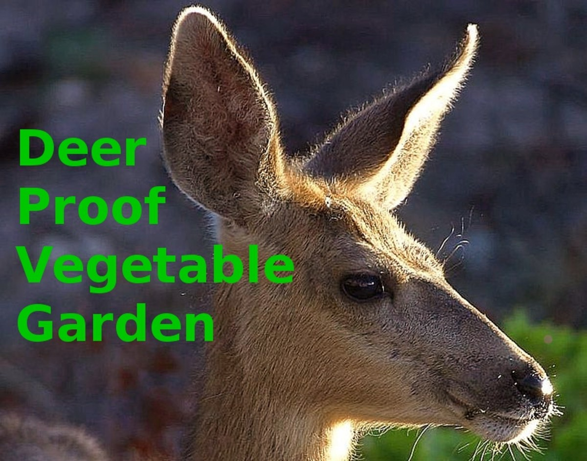 source figuring out how to keep deer out of vegetable gardens