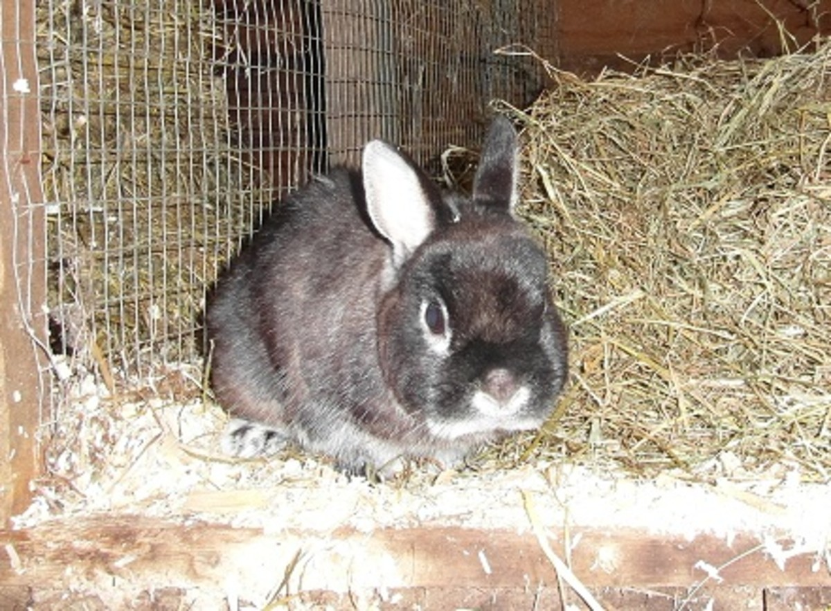 a healthy rabbit should be alert and inquisative