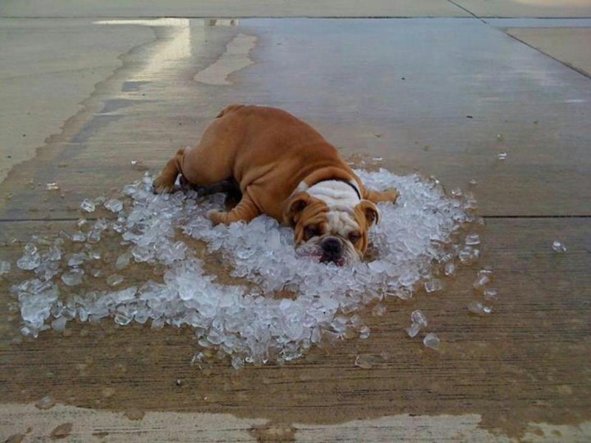 50 Ways to Beat the Heat and Chill Out