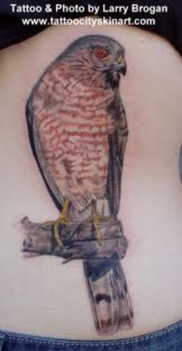 Hawk Tattoos And Meanings