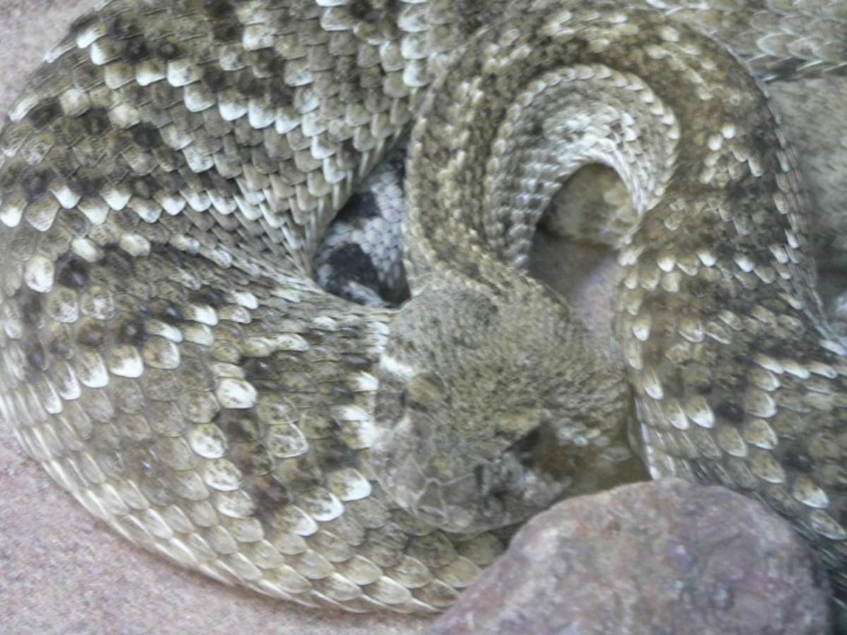 What kind of snake am I?