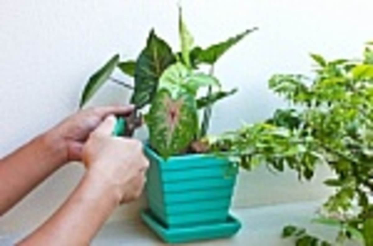 Have a bunch of indoor plants to take care of