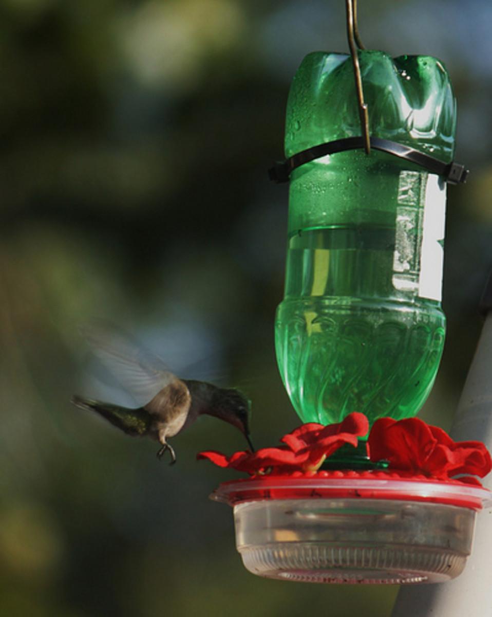 Homemade bird feeders for Homemade bird feeders