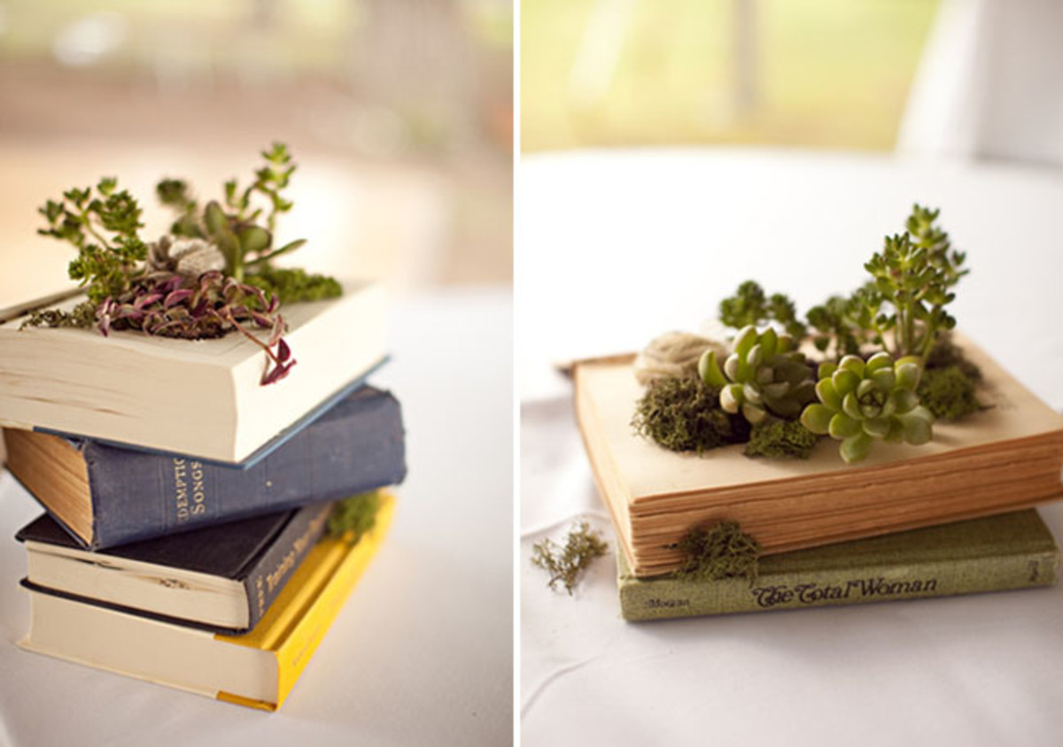 Instructions on how you can turn an old book into a succulent garden.