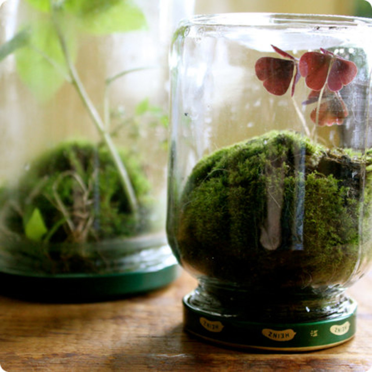 Pickle Jar Terrarium