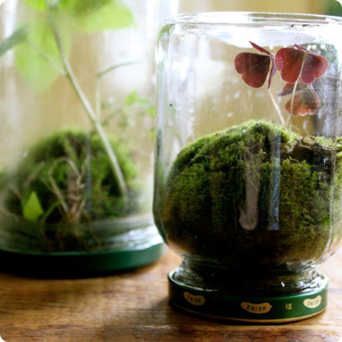 Unusual Planters