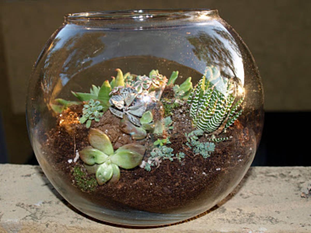 Succulent Garden in a fishbowl!