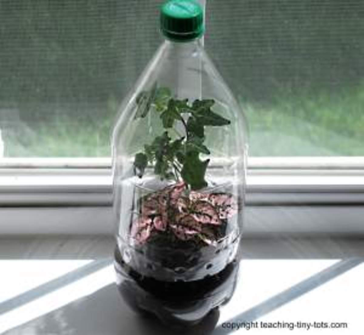 Soda Bottle Terrarium