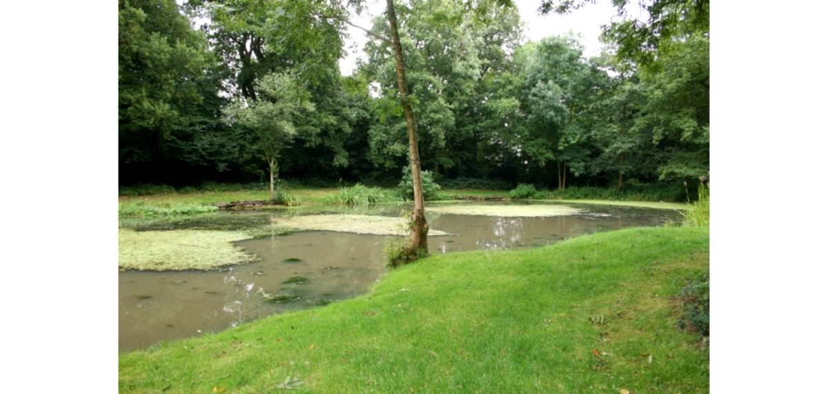 The fishing pond