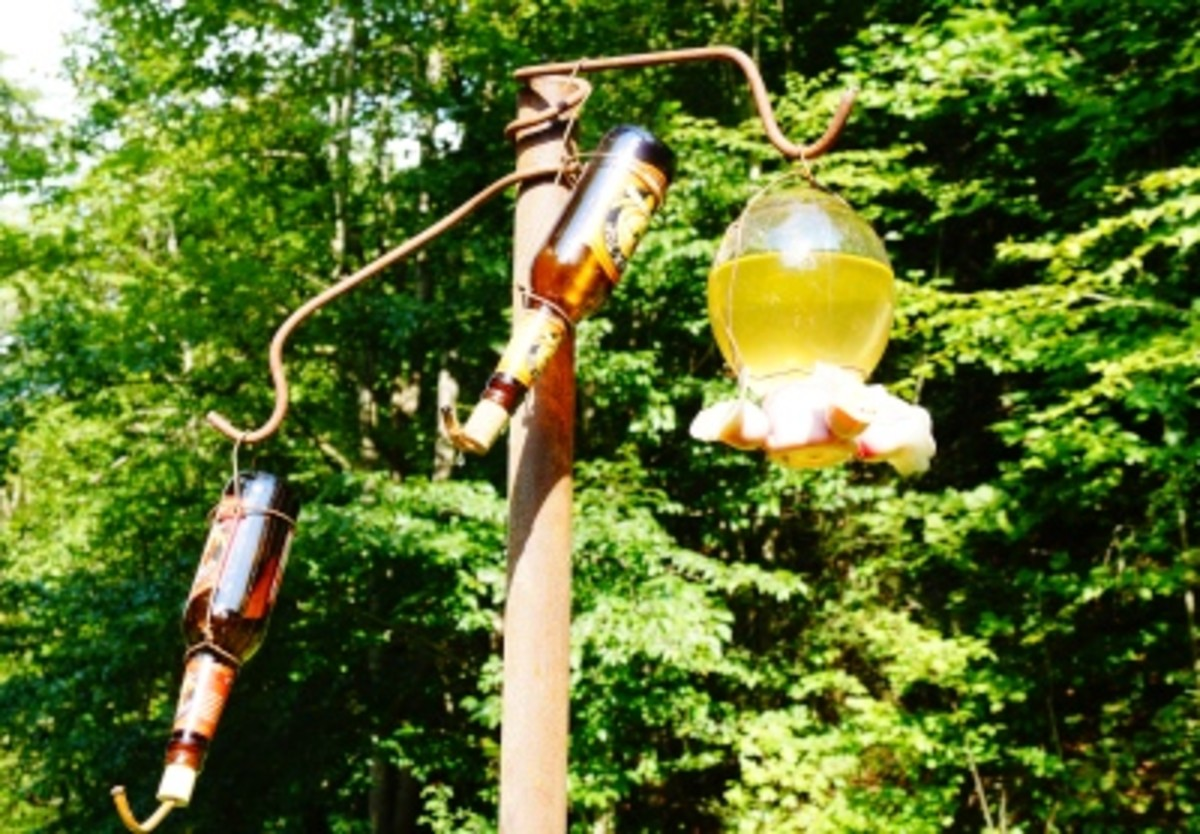 I have three hummingbird feeders: a regular one, plus two homemade ones.  I also made the nectar - you don't have to dye it with red food coloring - the red in the feeder lets the hummingbirds know to feed from it.