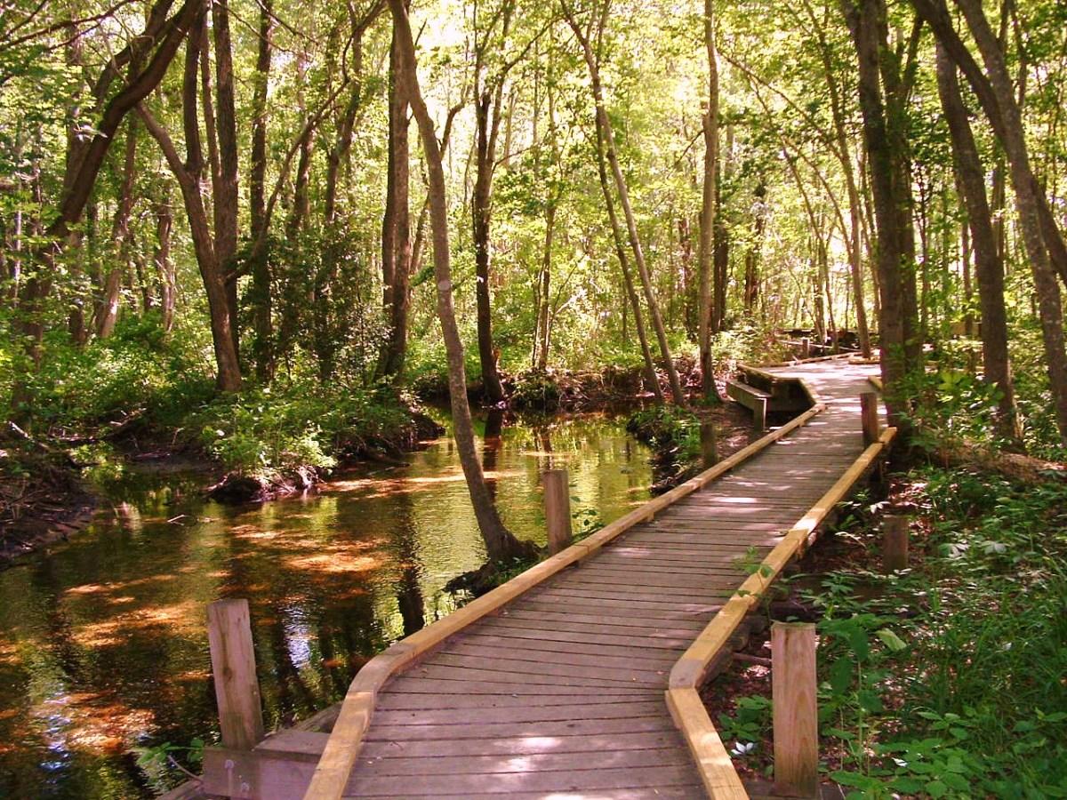 Abbott's Mill Pond nature walk where Rosemary and Bob took camp kids to take nature photos.