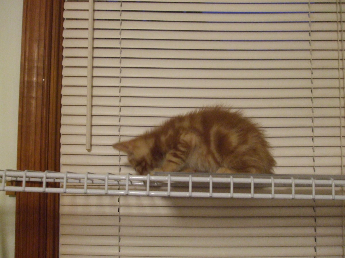 How to Make a Window Cat Shelf: Step by Step Instructions