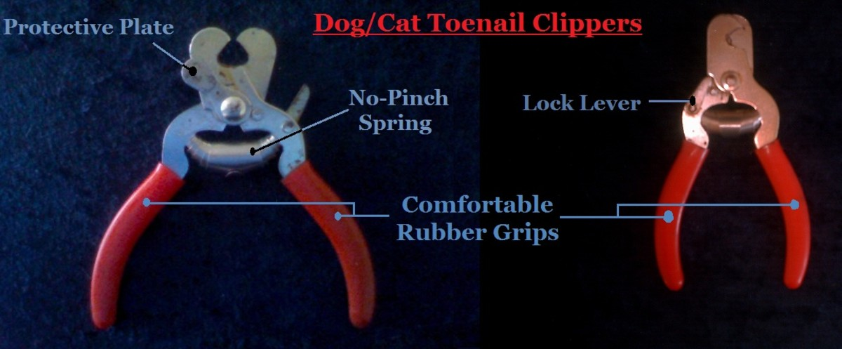 How to Trim Dog Toe Nails Properly