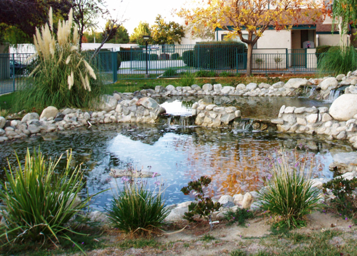 Homeowners Association pond for decoration. The local raccoon loved it . . . until the fish were gone and we started using chlorine.