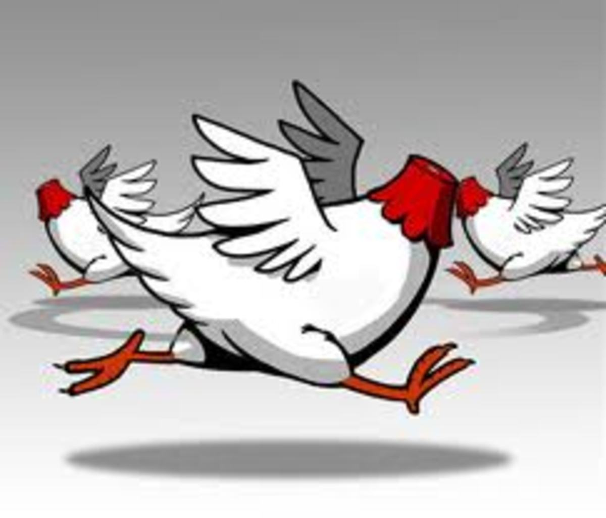 running-around-like-chickens-with-their-heads-cut-off