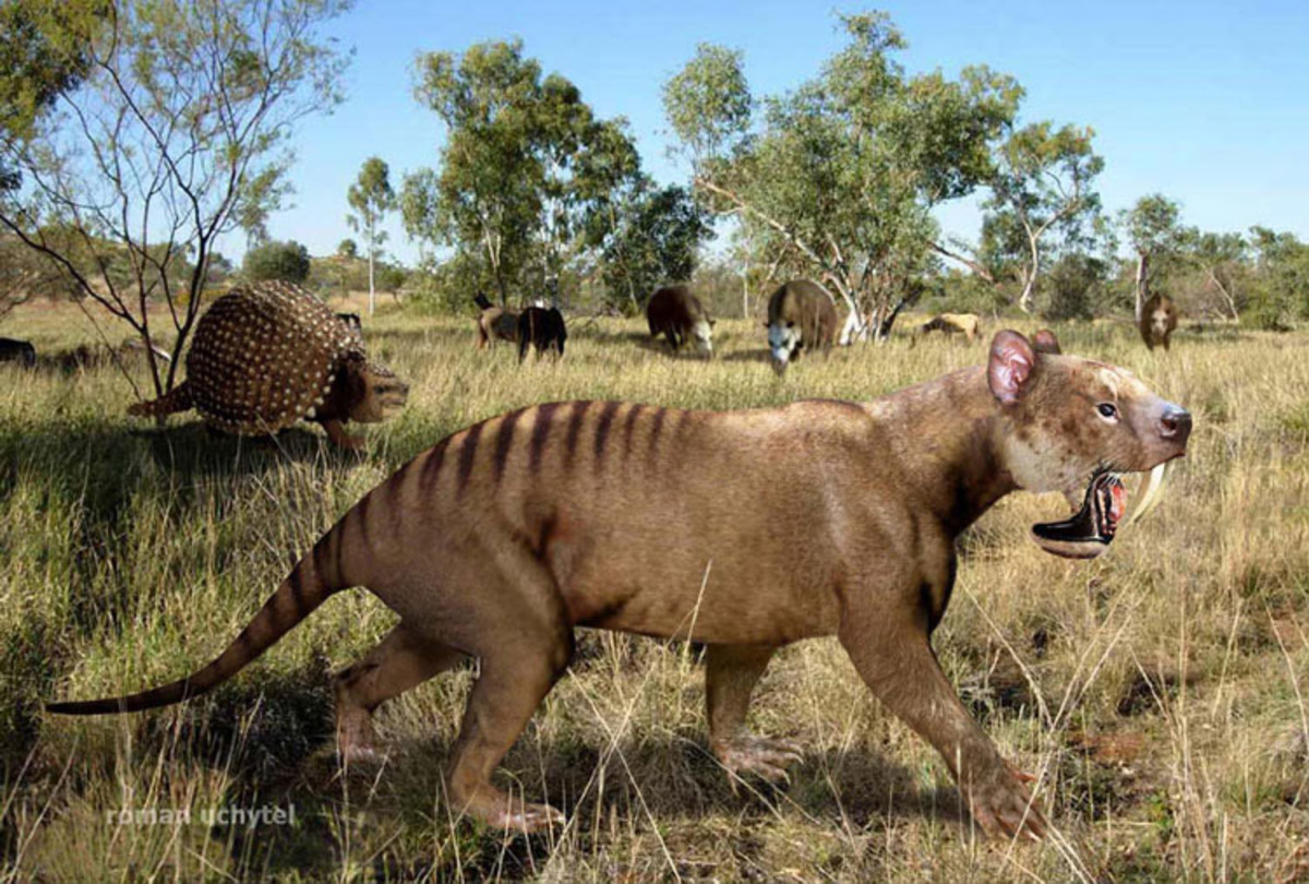 Thylacosmilus was a genus of sabre-toothed metatherian predators that first appeared during the Miocene.
