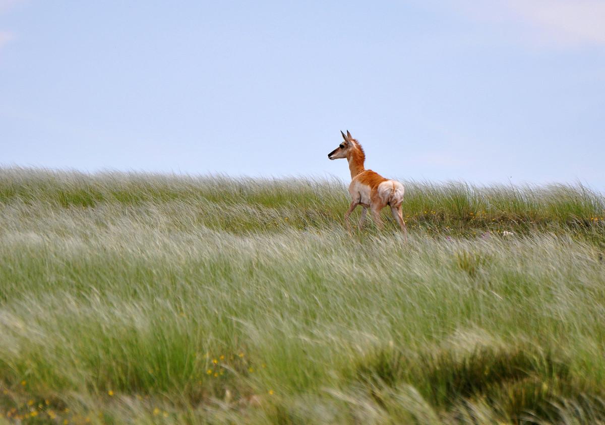 Kiowa National Grasslands