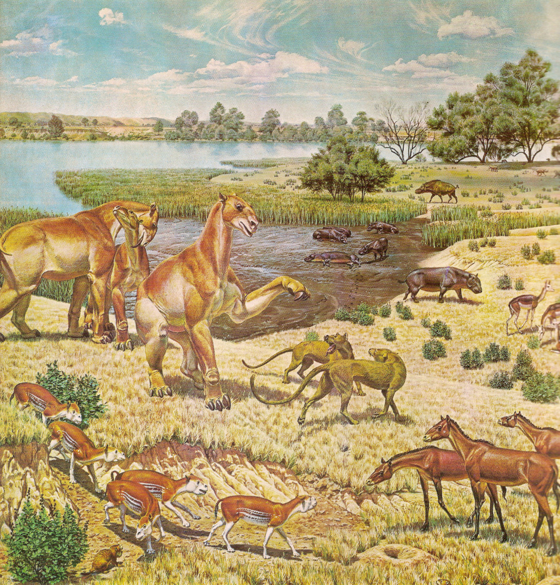 Life on Earth During the Miocene Epoch