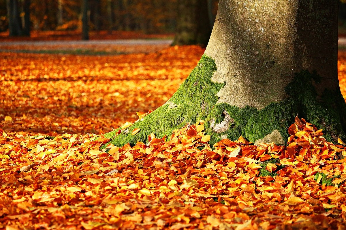 Fall is so beautiful!  It doesn't need Halloween to make it a special time of year.