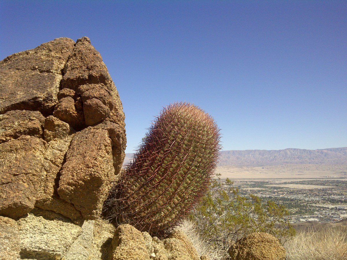 Cactus-eye view of northern Coachella Valley