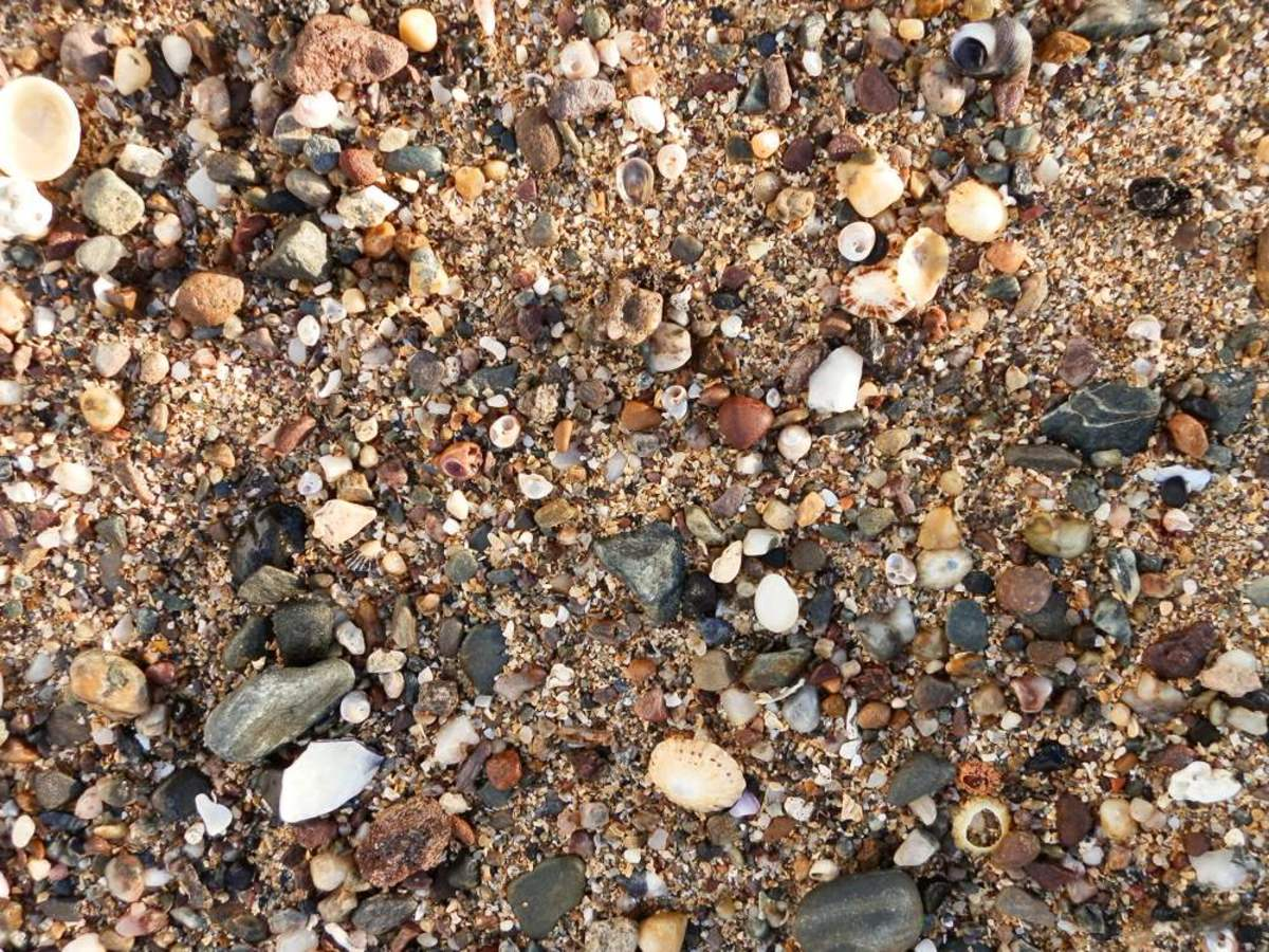 beaches with small gravel and shells are more likely to contain cowrie shells