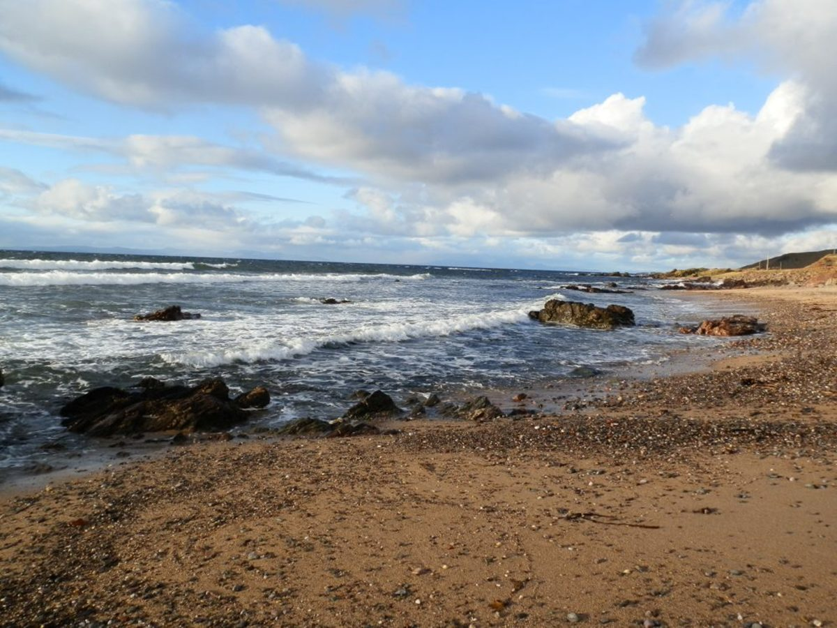 typical cowrie shell beach