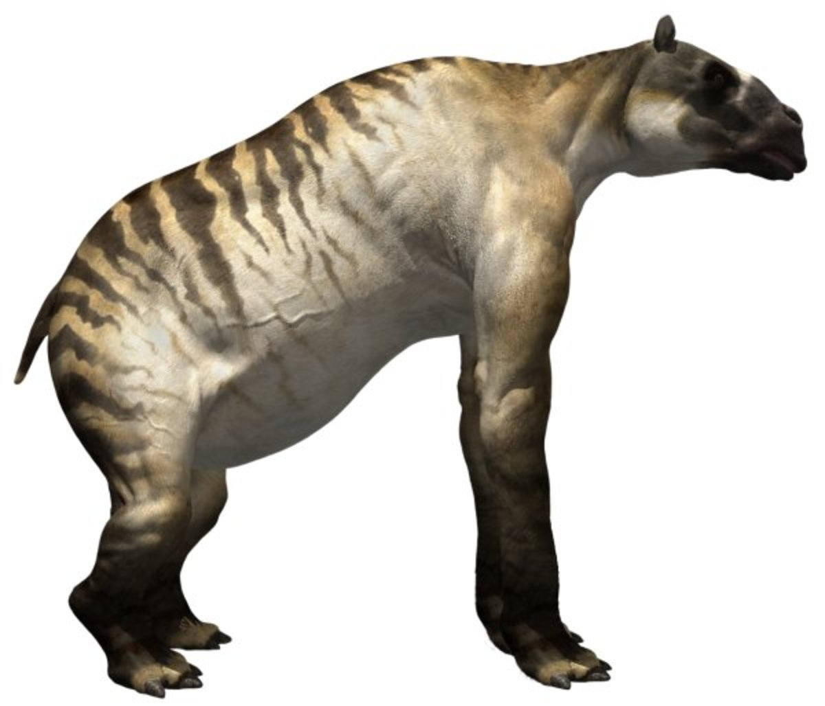 Ancylotherium belonged to an ancient group of mammals known as chalicotheres, which were once a varied and widely distributed group. But Ancylotherium is one of the last of its kind.