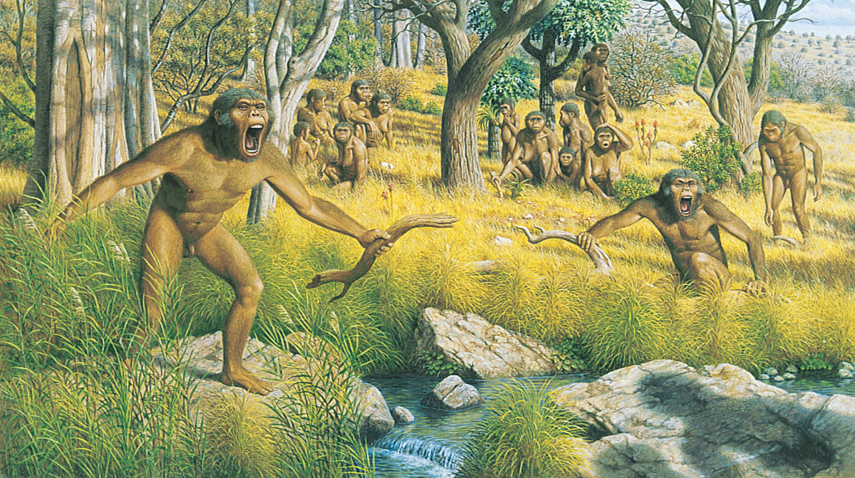 The acacia group attempting to defend themselves from strange australopithecines. Unfortunately, a numerical disadvantage meant that they were driven out of their territory.