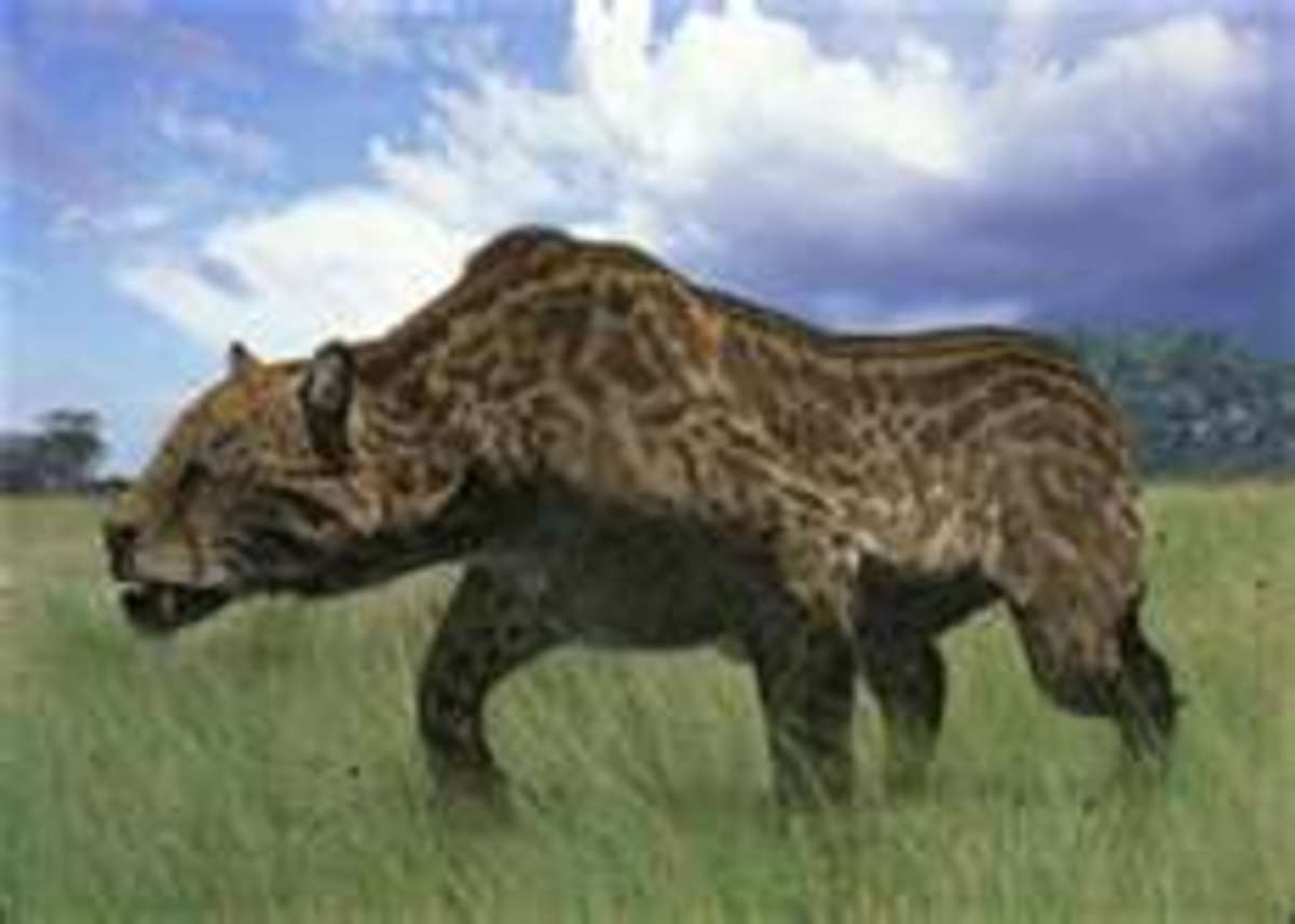 Dinofelis was one of several kinds of sabre-toothed cats that lived alongside the big cats we're more familiar with today such as lions.