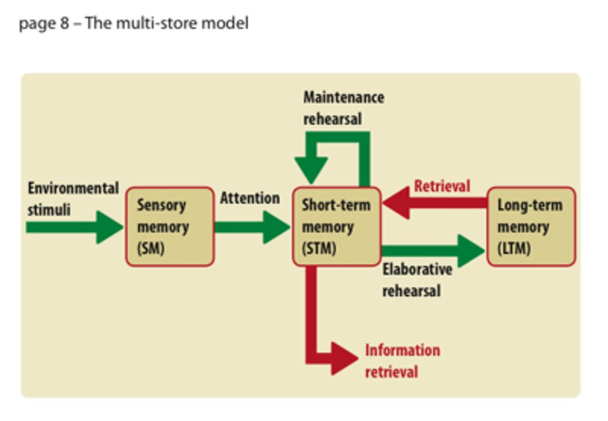 The Muti-Store Model of Memory