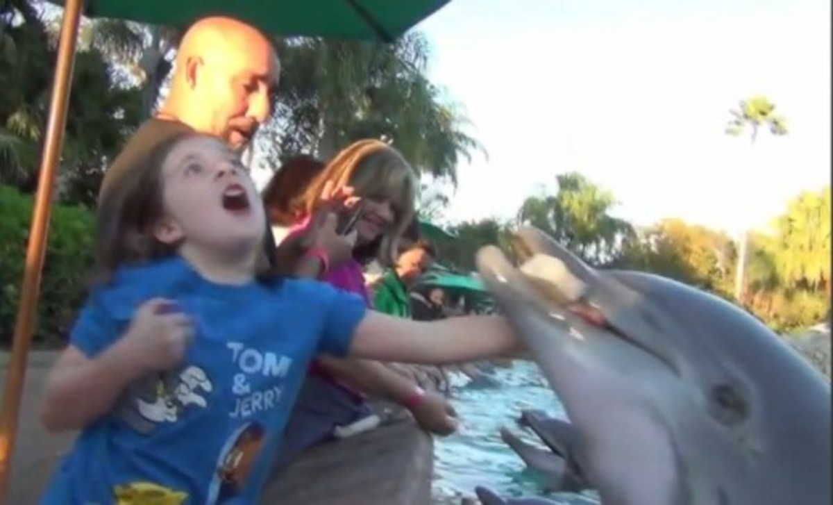 The Danger of Captive Dolphin Encounters