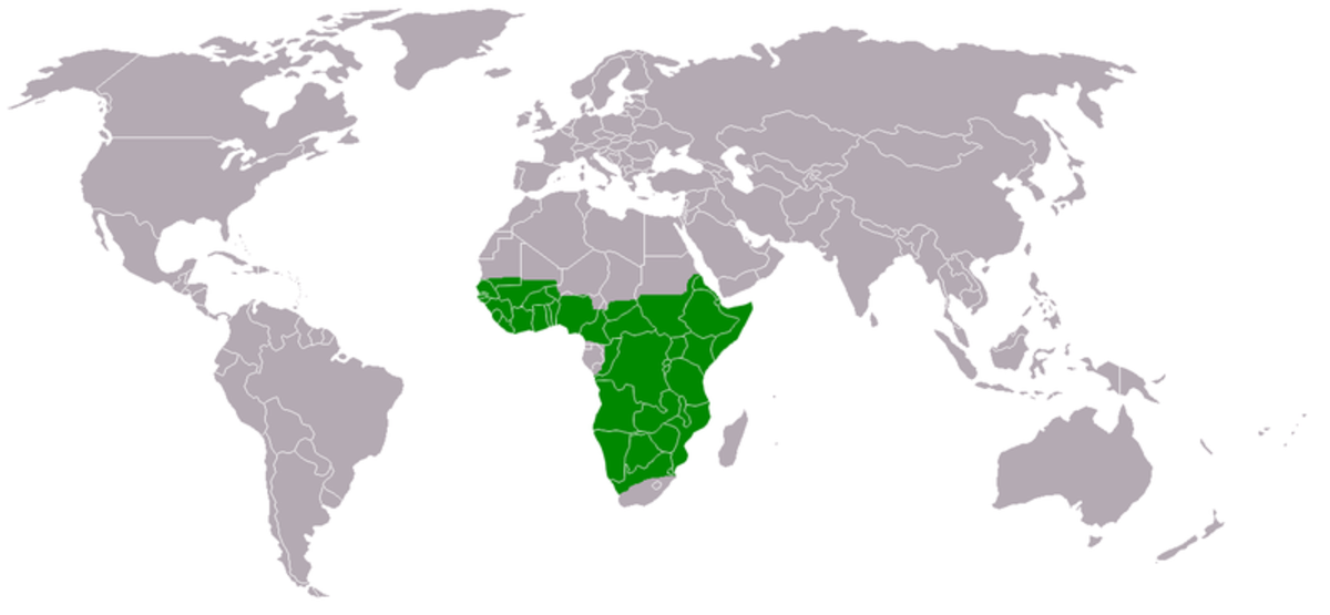 Range of the Martial Eagle