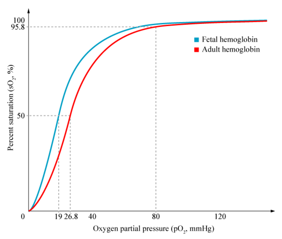 The fetal oxyhaemoglobin disassociation curve (the blue line).