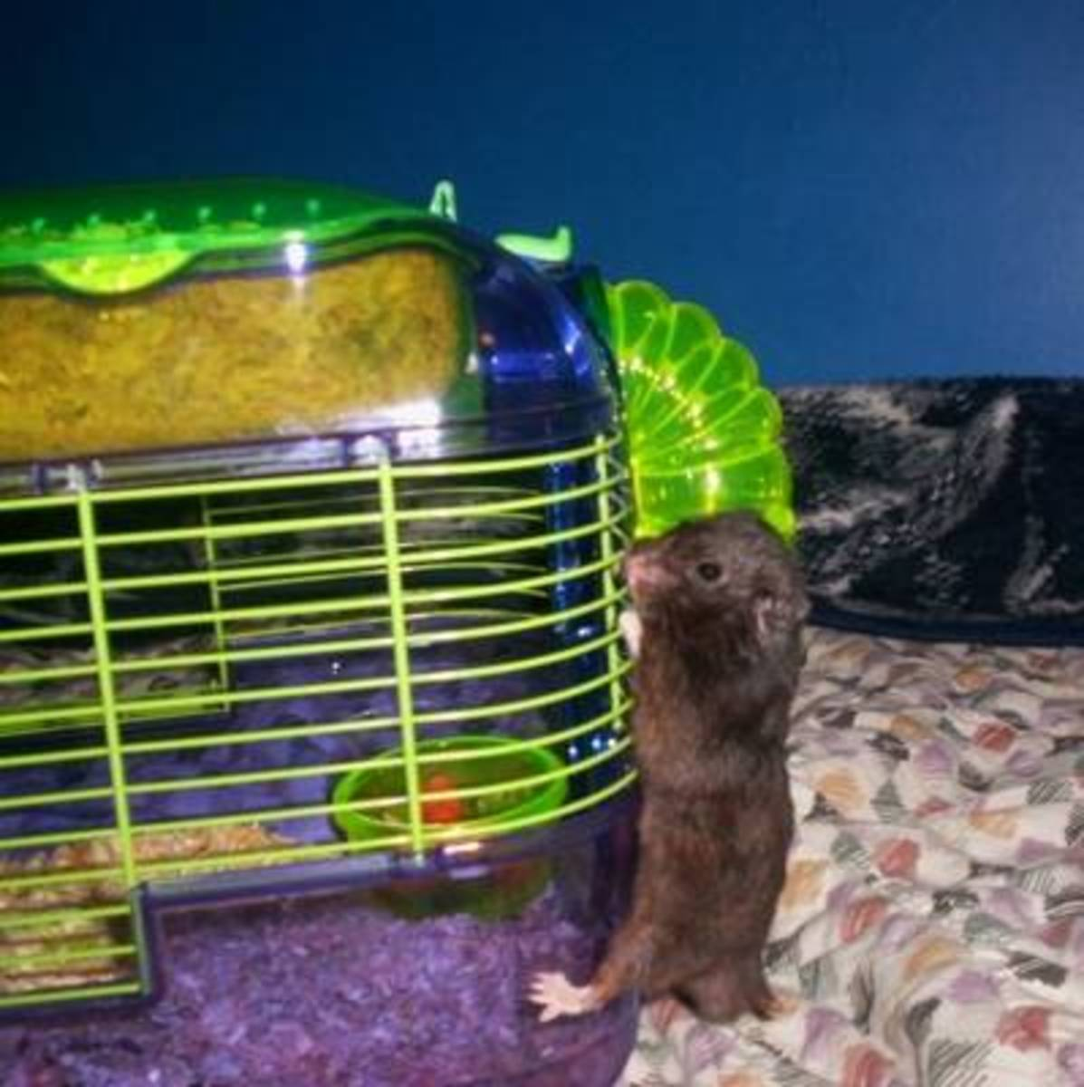 Hamsters Are As Afraid Of You As You May Be Of Them