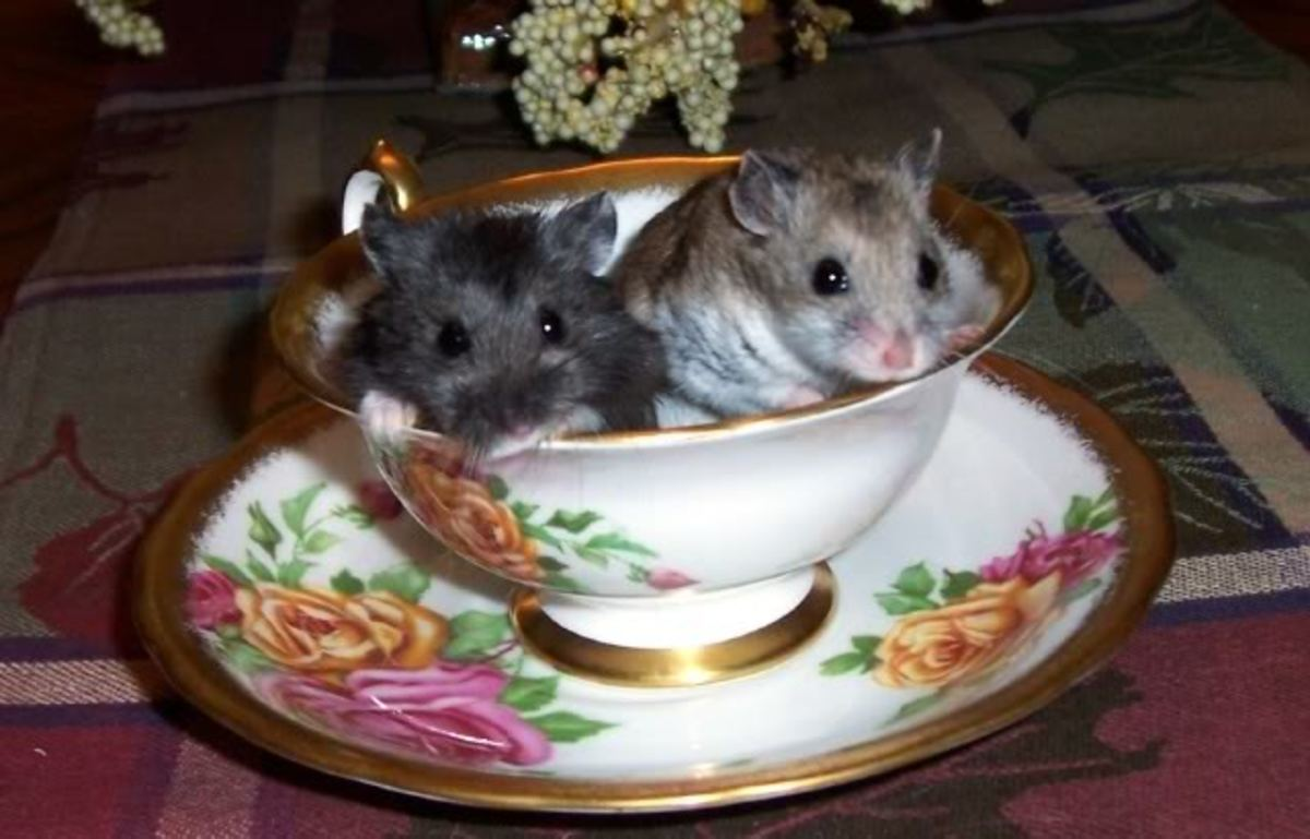 Hamsters are so friendly and there is no reason to be afraid of them.