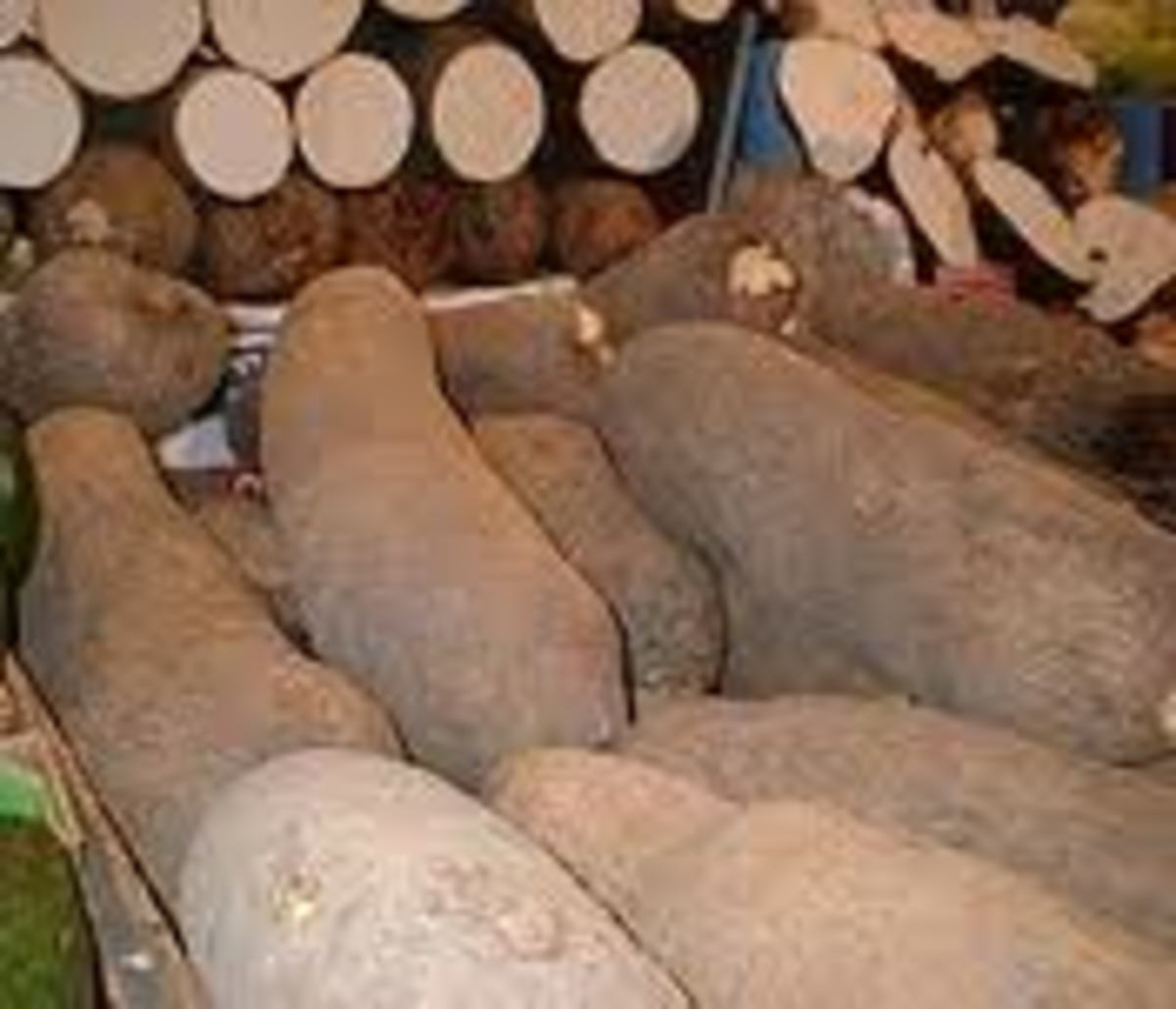 A Variety of Yams, very versatile and easily available