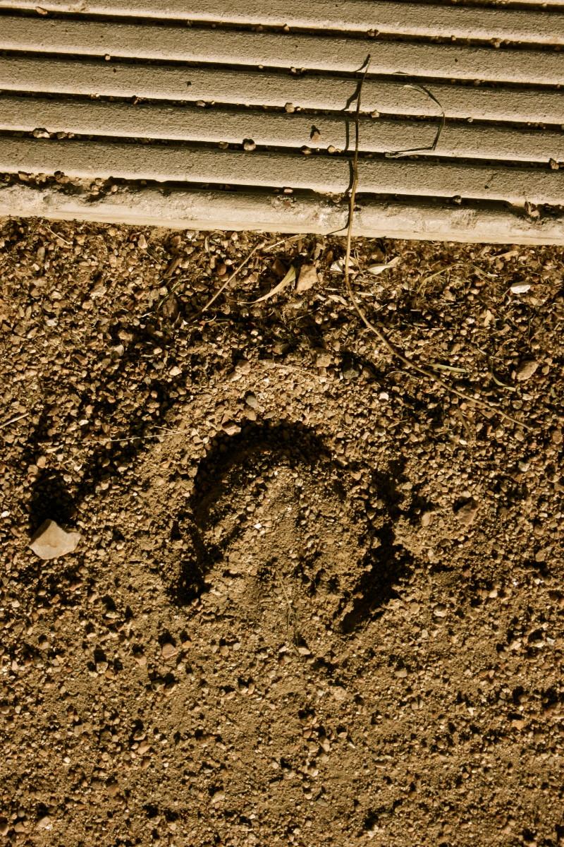 Where the hoof print meets the sidewalk