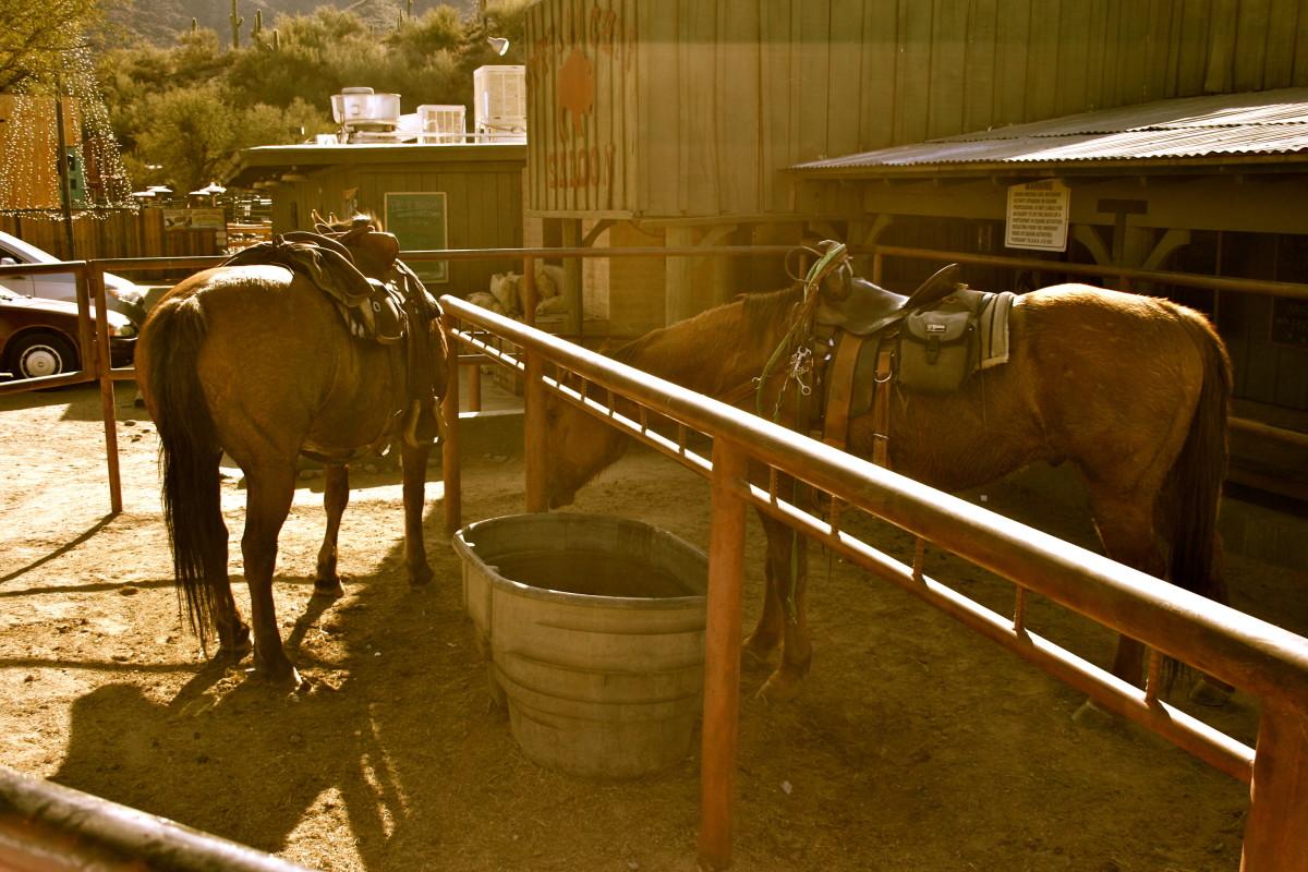 Two horses hang out at the Buffalo Chip Saloon